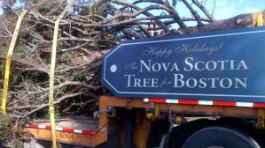 Nova Scotia tree for Boston